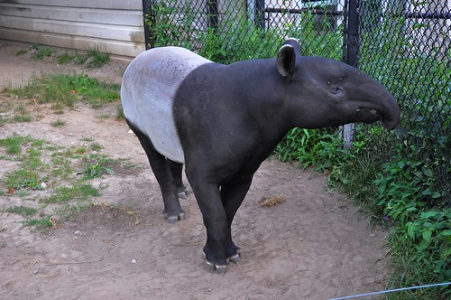 Zoo 297
