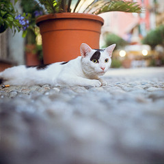 Rolleiflex 0309 (ukaaa) Tags: road italy white black 120 6x6 tlr film analog cat square focus italia julie fuji dof bokeh liguria low ground depthoffield cobble fujifilm medium mf groundlevel cinqueterre analogue vernazza viaroma canoscan twinlensreflex fujicolor ratseyeview sekonic l308s rolleiflex35e 8800f pro400