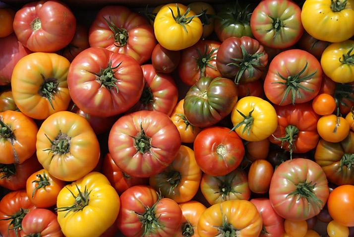 [img : tomaten]
