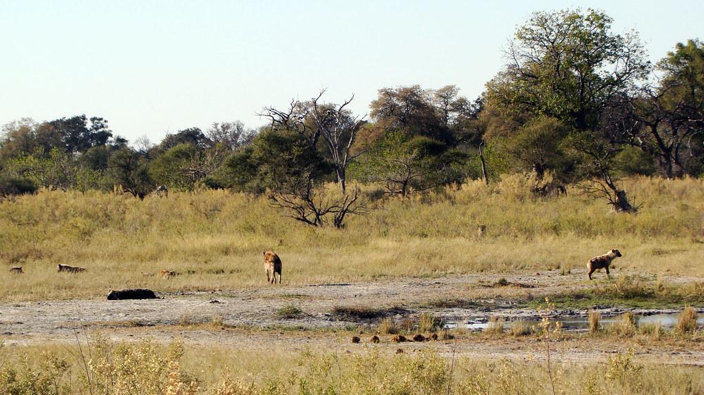 DSC07650 hyenas