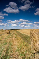 Field with bales of straw (P.Sobczyk (away)) Tags: blue summer sky sunlight white plant field clouds countryside horizon border harvest straw poland crop hay agriculture bales updatecollection
