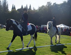 Synchronised horses
