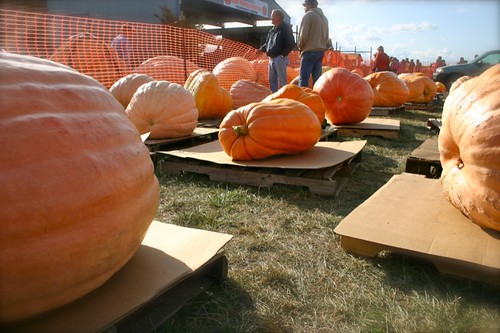 the land of pumpkins