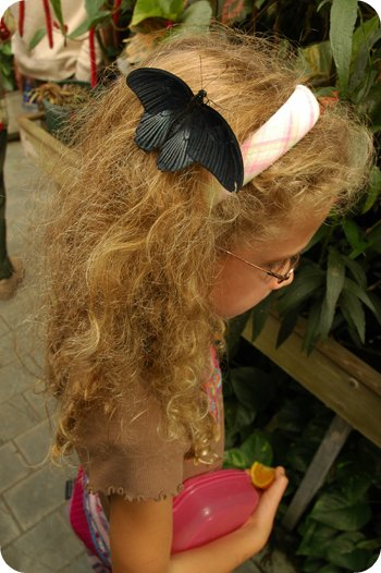Butterfly as hair clip