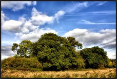 The Wood. (Pat Dalton...) Tags: trees sky wool grass clouds canon leicestershire sigma contrails 1770mm blaby 450d bouskellpark pdeee454