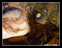 Bernard l'Hermite . (Barnie76@ ,) Tags: mer de eau couleurs panasonic bord fonds coquillages marins