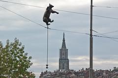 balancierender Bär von Carlo E. Lischetti