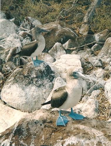 Galapagos-Seymour Nord (2)