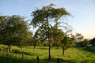 Jardin frutier de Lorraine, à Morey (entre Nancy et Metz)