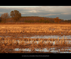 Summer has long gone (Luca Cesari Photography) Tags: autumn trees fall colors field canon landscape crop 400d ef702004is lucaeos