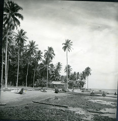 Palms on the shore of Unauna Island