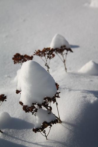 Snow! 037