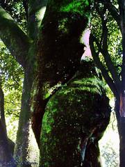 tree erotic (Luis Diaz Devesa) Tags: españa woman tree sexy female naked mujer spain europa europe erotic nu galicia galiza árbol forms formas pontevedra riasbaixas desnudo femenino erotique erotico 色情 vilagarciadearousa ヌード villagarciadearosa 裸體, mygearandme musictomyeyeslevel1 luisdiazdevesa 、セクシー、