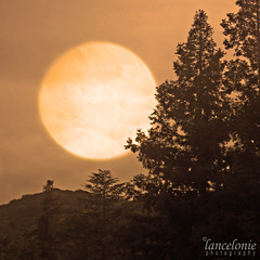 Above Descanso (lancelonie) Tags: sunset moon mountain monochrome silhouette pinetree sepia landscape dusk monotone fullmoon orangesky photoart pinetrees sepiatone descansogardens orangemoon bokehmoon sacredmoon