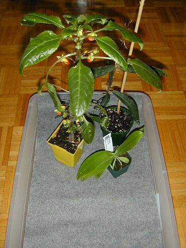 dry matting with plants