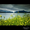Yellow (David Parks - davidparksphotography.com) Tags: flowers david mountains alaska fishing nikon parks sigma glacier d200 1020mm soe ellow aplusphoto theunforgettablepictures —obramaestra—