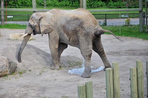 Zoo 227