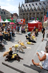 All dogs 'stay' (eikootje) Tags: dog demo hond servicedog demonstratie hachiko gentsefeesten assistancedog hulphond assistentiehond vzwhachiko
