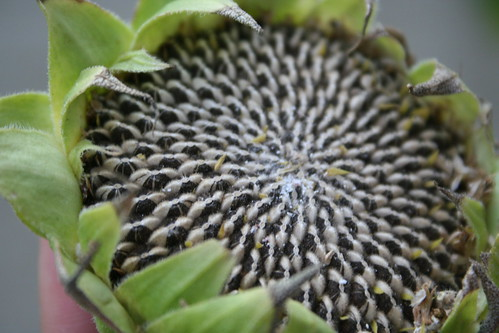 Sunflower seeds!