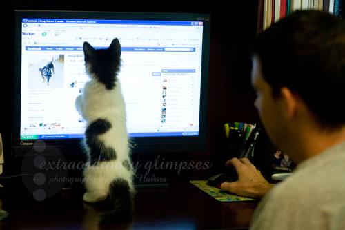 KittenDots_Aug012009_0001web