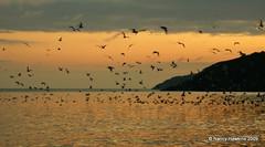 View from Middle Cove Beach, NL at 5 am (Nancy Hawkins) Tags: ocean sky orange seagulls beach water clouds sunrise newfoundland gulls atlantic middlecovebeach