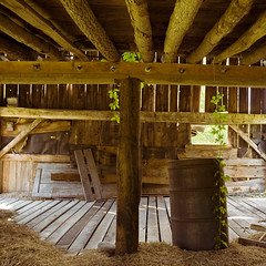 drop in the bucket (helveticaneue) Tags: park wood plants abandoned water overgrown loft barn newjersey vines pennsylvania decay farm barrel gap vine roadtrip holes september poconos delaware 2009 beams daytrip delawarewatergap hayloft dwg minerfarm