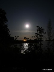 Moon river (polaroidized) Tags: ocean sea sky plants moon reflection night finland dark landscape evening scenery moonlight finnish siluettes