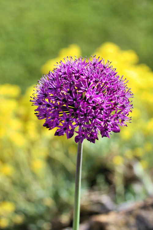 flower 2202 R