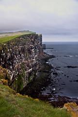 (N4n0) Tags: punto iceland islandia mas al puffins oeste ijsland frailecillos  izlanda  latrabiarg   islande