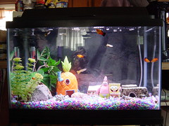 Our 2nd Aquarium - 10-gallon - Photo 11 by Jim Trottier, on Flickr
