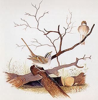 serçe kuşlar ve cariyeler