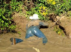 54 WS One more mud wallow on this hot day! (wranglerswimmer) Tags: wet cowboy wranglers swimmingfullyclothed guysinwetjeans wetcowboy wetwranglerjeans
