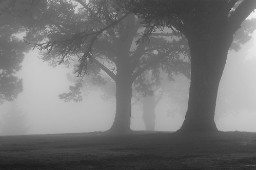 black and white photography trees. Ghost Trees, originally