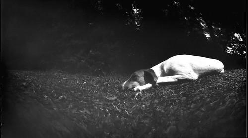 Sueños de perro_Estenopeica