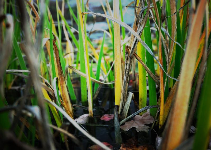 Pond Spikes