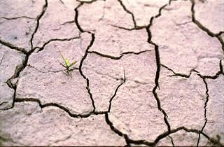dry life 2