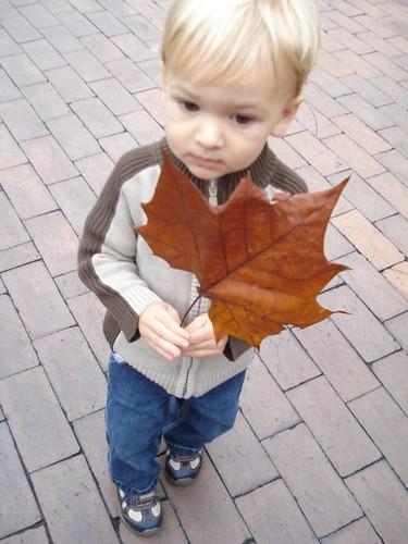 Big leaf, little boy!