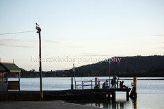 Gosford (lukaszwlodas) Tags: bird beach water sydney australia pelican pelikan woda gosford ptak plaa pla¿a