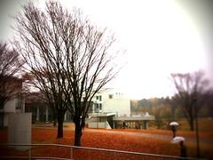 慶應義塾大学湘南藤沢キャンパス 大学 (taromatsumura) Tags: kanagawa sfc shonandai
