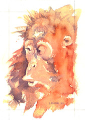 Orangutan Watercolour Painting by Steve Greaves (Steve Greaves) Tags: portrait baby art nature animal pencil sketchy watercolor painting creativity sketch artwork paint artist drawing wildlife creative young fast naturalhistory 1993 study orangutan ape impressionism watercolour rough quick primate impression impressionistic loose spontaneous barnsley southyorkshire pongopygmaeus spontaneity burntsienna bornean watercolourpaper paynesgrey stevegreaves