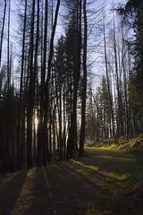 one of year's last chances (Jenser (Clasix-Design)) Tags: winter light shadow sun tree forest licht thringen woods path mountainbike thuringia sonne wald bume schatten baum fahrrad weg pfad ilmenau canoneos450d canonefs1855mmf3556is
