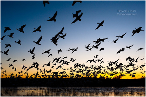 Blast Off... Bosque Del Apache (345/365)