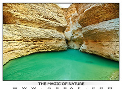 THE MAGIC OF NATURE (Fahad-111) Tags:    themagicofnature