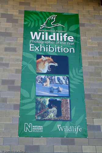 Wildlife Photographer of the year banner