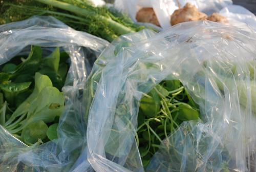 Mache, Cladonia (miner's lettuce), fennel, sunchokes