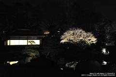 SUV_8754 (Cougar-Studio) Tags: castle nikon kyoto 京都 d3 nijo 二条城 nijocastle 世界遺產 元離宮 20110404