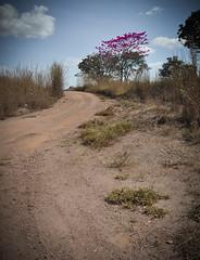 Colorindo... (Claudia Oseki) Tags: road brazil sky tree nature brasília brasil landscape bush cloudy paisagem estrada goiânia goiás cloudys
