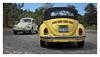 17_02_05_075p (2) (Quito 239) Tags: volkswagen 1971volkswagen 1971volkswagensuperbeetle superbeetleconvertible vw bug vocho escarabajo puertorico haciendaigualdad volky