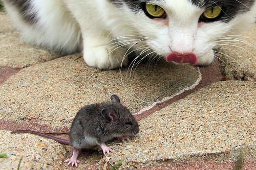 Gato y ratón en la acera