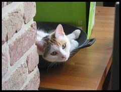 Wok you! (pyriet) Tags: cute brick green cat table kat sweet box poes wok peering beiga missyoutoo